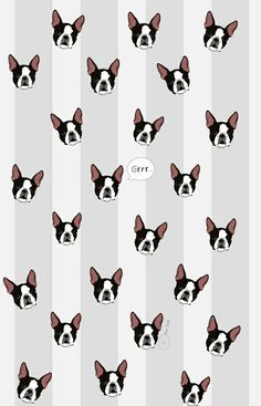 Boston terrier wallpaper en fersoir.blogspot.mx