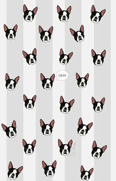 Boston terrier wallpaper en fersoir.blogspot.mx