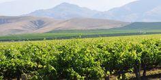 Sierra Foothills Wine Region - California