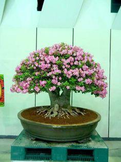 Bonsai Love ~ Our roots blanket Gaia ♥