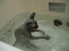 And him? He's just doing what he does best. | 14 Hilarious GIFs That Prove Water Is Endlessly Entertaining