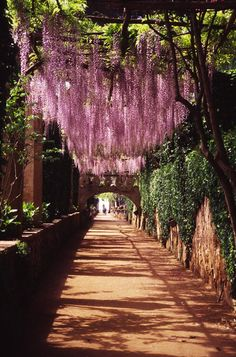 wisteria walkway, ravello#Repin By:Pinterest++ for iPad#  http://www.justleds.co.za