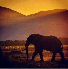 #manapools #zambezi #zimbabwe #holiday