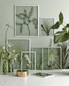 urban-jungle-interieur-planten-in-lijstjes