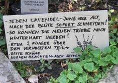 Lavendel Rückschnitt - Schild im Karl Foerster Garten