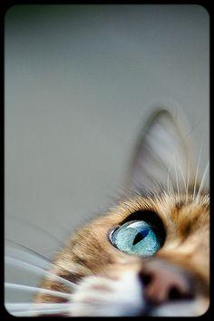 I spy Mr Licks by Mr 76 on Flickr