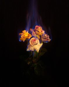 Mat Collishaw :: Burning Flowers