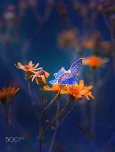 Butterfly by Mevludin Sejmenovic on 500px