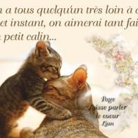 Calin Gif, Animals And Pets, Messages, Aldo, Couple, Cute Pictures, Pets, Text Posts