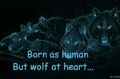 To all wolf therians everywhere! Wolf Qoutes, Lone Wolf Quotes, Wolf Pack Quotes, Wolf Photos, Wolf Pictures, True Quotes, Best Quotes, Funny Quotes, Fantasy Wesen
