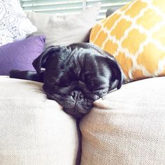 Weekends were made for napping
