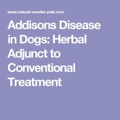 Addisons Disease in Dogs: Herbal Adjunct to Conventional Treatment