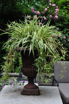 Traditional Garden Urns And Contemporary Containers Traditional Garden Urns And Contemporary Containers Container Gardening Flowers Gardening Perennials Garden Urns, Lawn And Garden, Summer Garden, Container Plants, Container Gardening, Outdoor Plants, Outdoor Gardens, Potted Plants, Pot Jardin