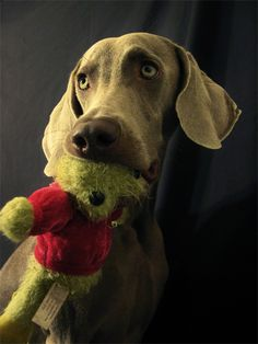 """""""I love my toy... I love him. I really do"""". In my mind, Harley's voice is a mix of Forrest Gump and the Easter Island heads from Night at the Museum. :)"""