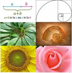The golden ratio in nature.  Phi, the golden ratio, also known as divine proportion, golden section or golden mean, is seen in nature, beauty, art, architecture, and other areas.  It is approximately equal to 1.618.