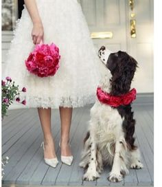 Flowers and a springer spaniel. My style exactly.