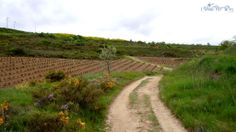 Vineyard east of Viana Spain Camino de Santiago On The Camino de Santiago in Spain, Los Arcos to Viana