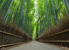 """633 Beğenme, 30 Yorum - Instagram'da Orrin Hancock (@orrinhancock): """"The bamboo forest in Kyoto was pretty high up on my list of places I wanted to visit in Japan. We…"""""""