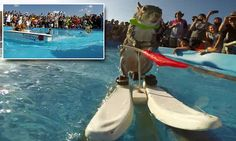 Twiggy the water-skiing squirrel makes splash at X Games Austin