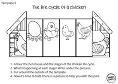 Bird Life Cycle, Life Cycle Craft, Communicative Language Teaching, Middle Childhood, Chicken Life, Toddler Learning Activities, Science Classroom, Science Projects, Life Cycles