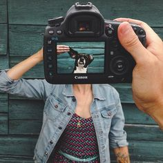 Creative Pet Portraits-4