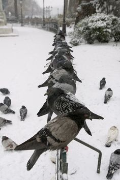 Pigeons huddle on the gate in front of Notre-Dame cathedral