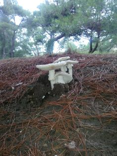 yağmurdan sonra çıkan yaban mantarı