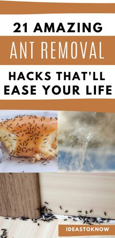 Daily Life Hacks, Useful Life Hacks, Ant Removal, Ant Spray, Bug Spray Recipe, Diy Pest Control, Get Rid Of Ants, Natural Pesticides, Pest Solutions