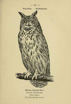 Hibou Grand-Duc (Grand Duke Owl) Atlas de poche des oiseaux de France, Suisse, et Belgique, utiles ou nuisibles :. Paris :Librairie des sciences naturelles P. Klincksieck,1898-.