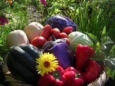 Soutenir nos agriculteurs! Quelles belles récoltes nous offrent-ils en cette saison d'abondance..