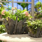 Creative Container Gardening: Tips, Projects & Ideas