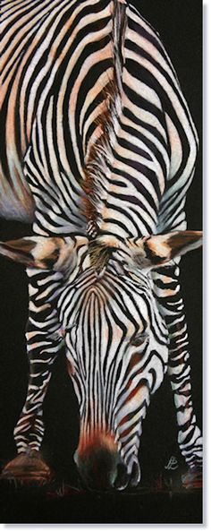 UKCPS - World of Coloured Pencil Exbition 2012.  'Up Front'    Pauline Longley UKCPS    12 x 31cm  Prismacolor on Black Stonehenge    I like working on black paper and zebras just seem to be a most suitable subject.   This is one of a pair, the other was a back view, now sold. This was painted from a photograph   I took at Marwell zoo.