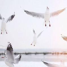 [CasaGiardino]  ♡  Jonathan Livingston Seagull...lina kuznetsova | Flickr - Photo Sharing!