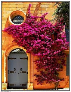 Pink Bougainvillea & Orange Wall                                                                                                                                                                                 More