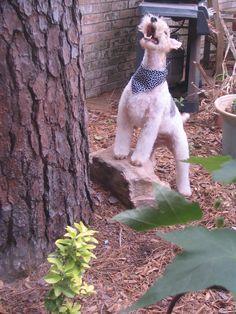 Come down here Mr. Squirrel!