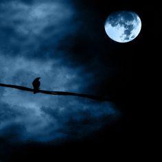 Noche de luna llena - Full moon night by Luz Adriana Villa A., via Flickr