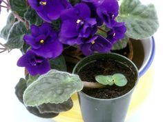Enamórate de tus plantas: Plantas para la propagación