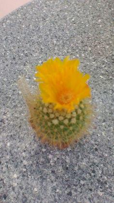 Kaktus Plants, Cactus, Plant, Planets