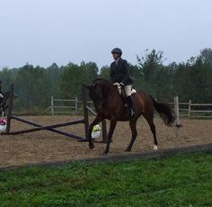 Lease/Part Board a Gorgeous Thoroughbred mare, 12yrs, 16hh