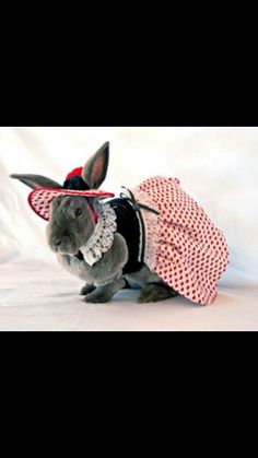 Various Colours Grey OK Baby Spidy Bunny Rocking Chair