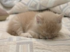 How to Get Rid of Fleas on Young Kittens thumbnail