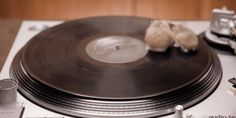 These hamsters chilling out on a turntable. | 23 Of The Most Enjoyable Things That Have Ever Happened