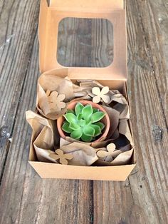 Premium four 2 inch rosette succulents assorted and Hand picked with love in 2 inch succulent rosette in clay pots perfectly packed for gifting  Customization Would you like something you don't see in our shop ? Simply send us a message and we will do our best to meet your Succulent Gifts, Succulent Gardening, Planting Succulents, Suculentas Diy, Cactus E Suculentas, Flower Packaging, Gift Packaging, Creative Box, Creative Gifts