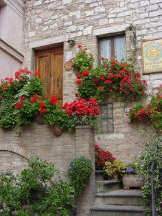 .janelas floridas