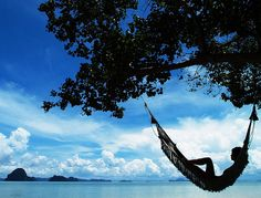 sunsurfer:     Silhouette Hammock, Maui, Hawaii  photo from larryjw
