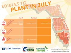 heat in makes planting difficult, but there are a few you can plant in Florida this month.The heat in makes planting difficult, but there are a few you can plant in Florida this month.