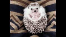 """How To Appease A Sulking Hedgehog ... Today is #fun day. Get biggest #funny #memes #funny_memes #funny_gif #funny_pictures #gif #gifs #funny_photos #funniest in here. Get #humor #quote Pic in here. So Follow """"Storyful Day"""" Today."""