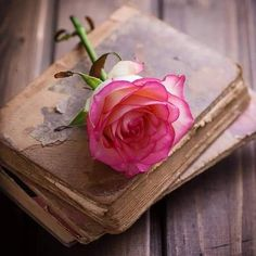 imagen en We Heart It Beautiful Flowers Wallpapers, Beautiful Rose Flowers, Love Rose, Rose Flower Wallpaper, Book Flowers, Flower Aesthetic, Jolie Photo, Pretty Pictures, Pink Roses