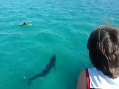 Close encounter of the Shark Kind by vladmir | looplr.com