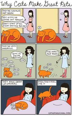 I love cats. Yasmine's Cat vs Human: Why Cats Make Great Pets I Love Cats, Cute Cats, Funny Cats, Funny Animals, Cute Animals, Cats Humor, Crazy Cat Lady, Crazy Cats, Cat Vs Human